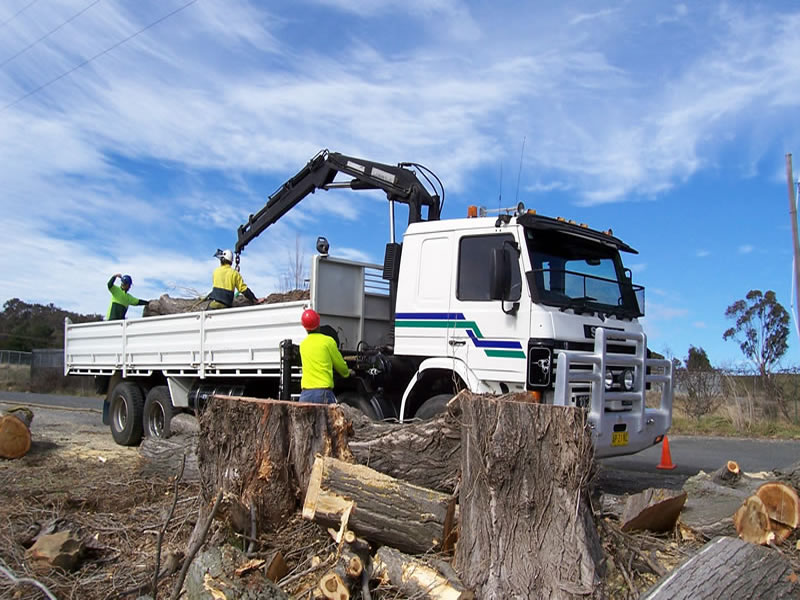 crane truck for large tree removal