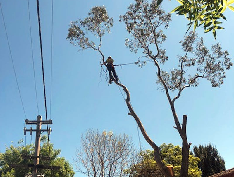 powerline clearing